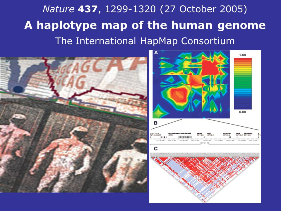 A haplotype map of the human genome
