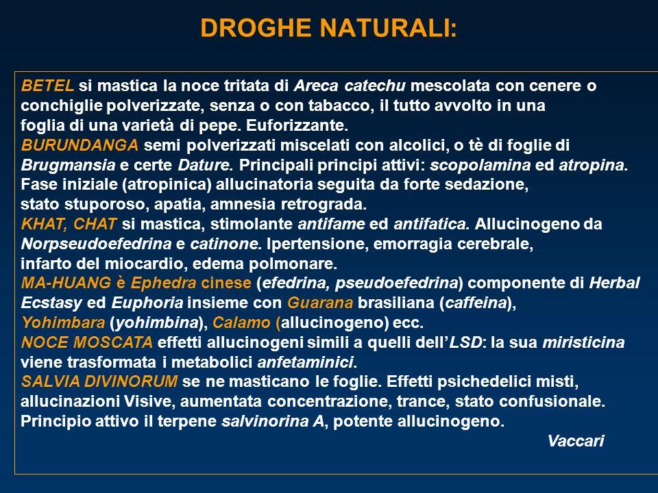 DROGHE NATURALI: BETEL si mastica la noce tritata di Areca catechu mescolata con cenere o.