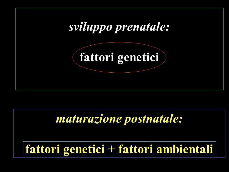 sviluppo prenatale: fattori genetici