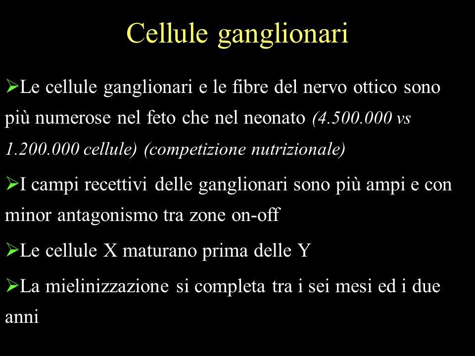 Cellule ganglionari