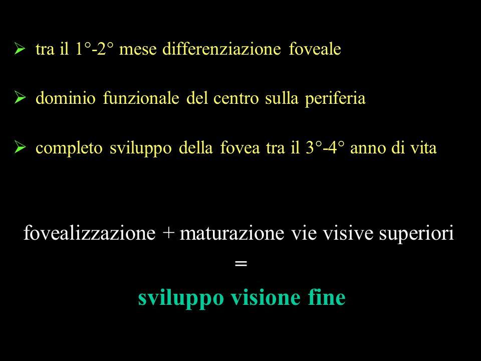 fovealizzazione + maturazione vie visive superiori