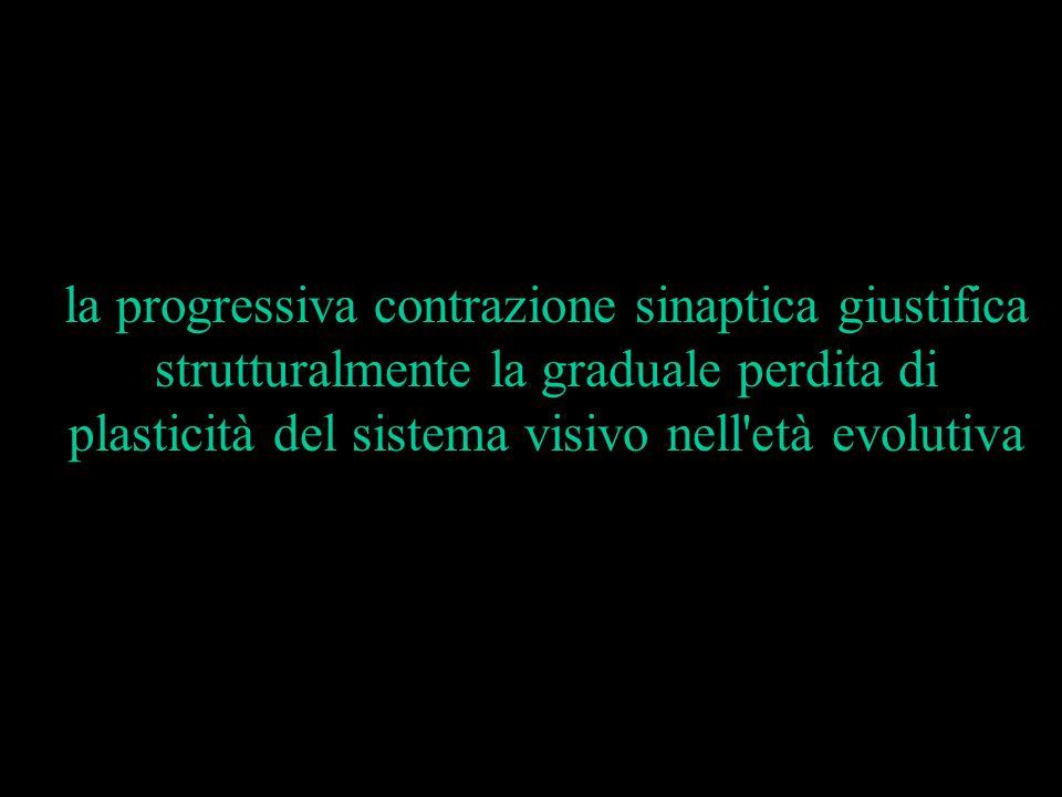 la progressiva contrazione sinaptica giustifica strutturalmente la graduale perdita di plasticità del sistema visivo nell età evolutiva