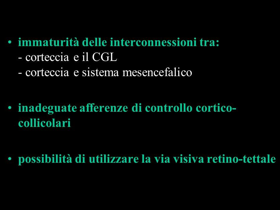 immaturità delle interconnessioni tra: - corteccia e il CGL - corteccia e sistema mesencefalico