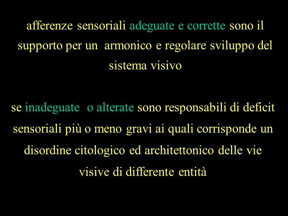 afferenze sensoriali adeguate e corrette sono il supporto per un armonico e regolare sviluppo del sistema visivo
