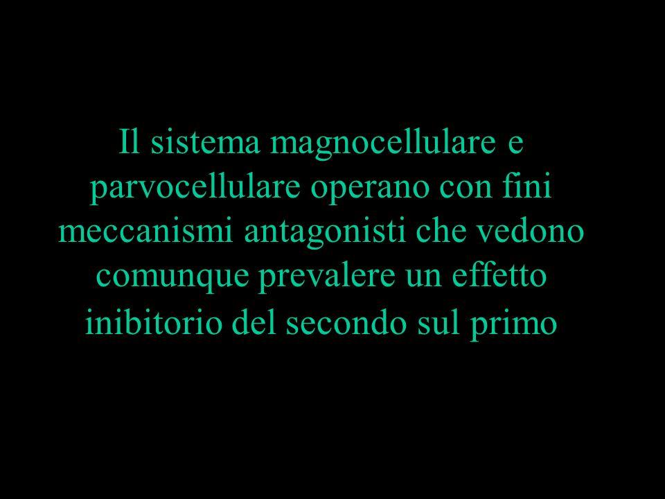 Il sistema magnocellulare e parvocellulare operano con fini meccanismi antagonisti che vedono comunque prevalere un effetto inibitorio del secondo sul primo