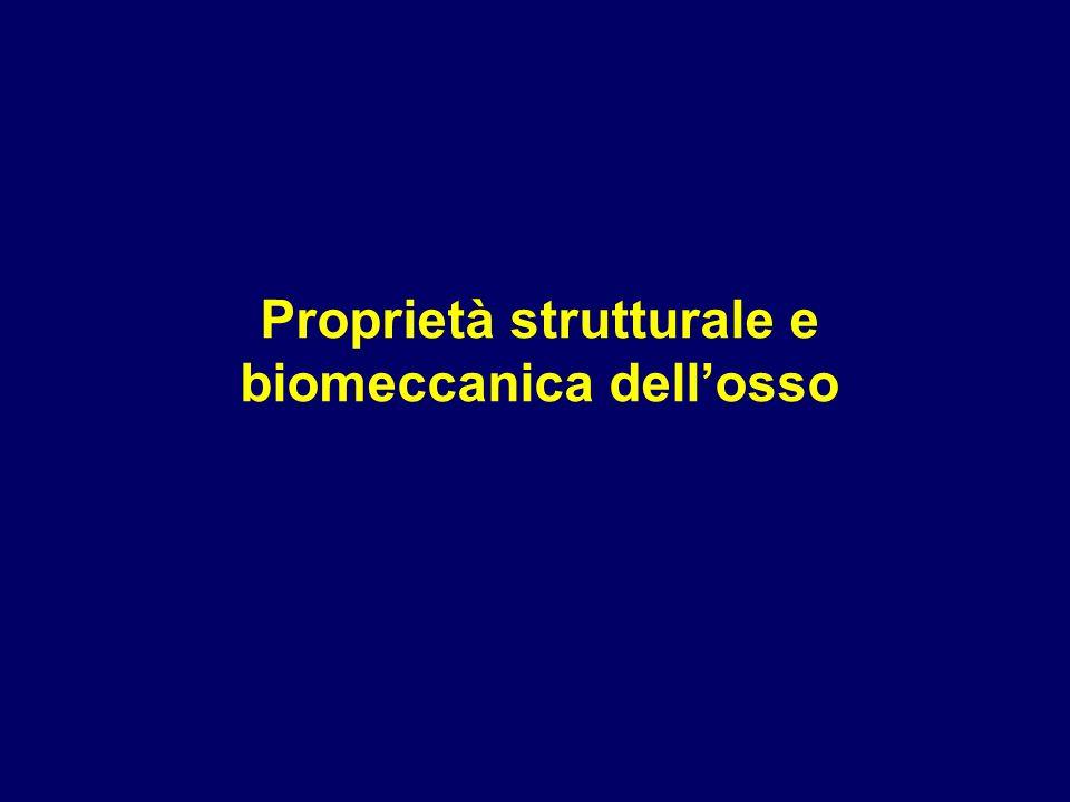 Proprietà strutturale e biomeccanica dell'osso