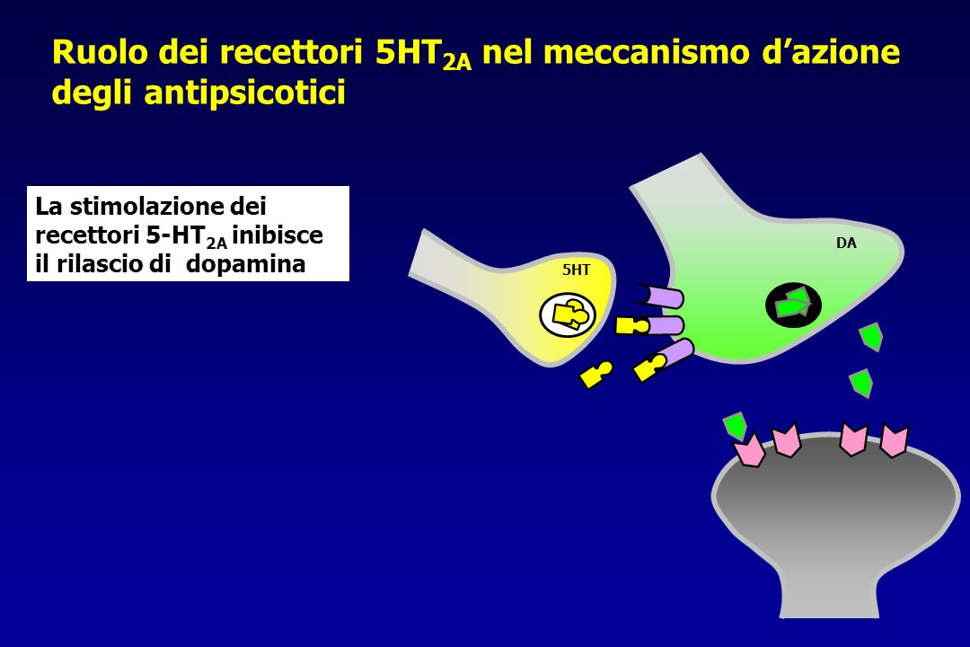 Ruolo dei recettori 5HT2A nel meccanismo d'azione degli antipsicotici