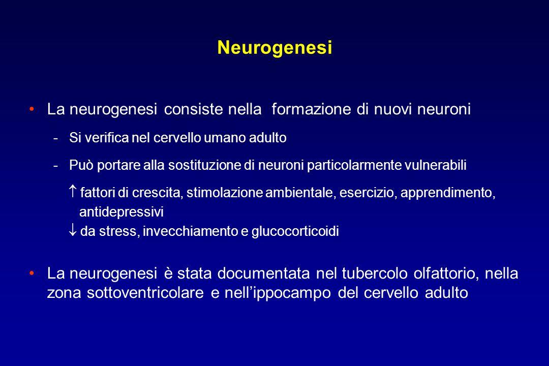 Neurogenesi La neurogenesi consiste nella formazione di nuovi neuroni