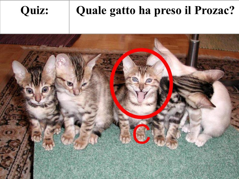 Quale gatto ha preso il Prozac