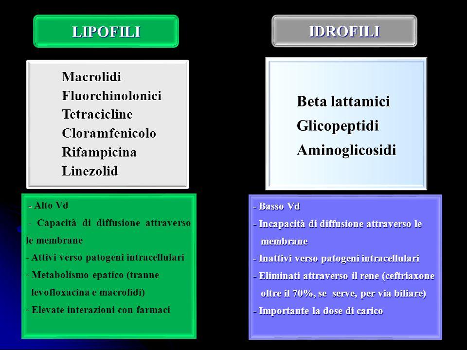 LIPOFILI IDROFILI Beta lattamici Glicopeptidi Aminoglicosidi Macrolidi