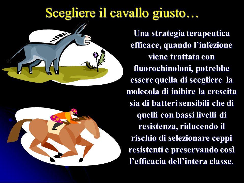 Scegliere il cavallo giusto…