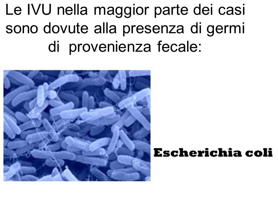 Le IVU nella maggior parte dei casi sono dovute alla presenza di germi di provenienza fecale: