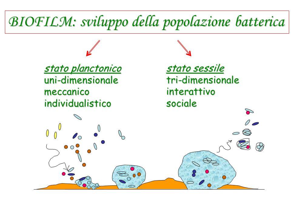 BIOFILM: sviluppo della popolazione batterica