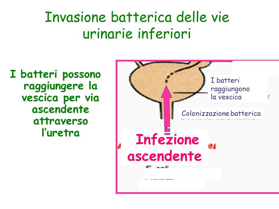 Invasione batterica delle vie