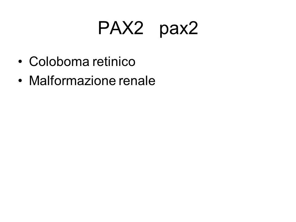 PAX2 pax2 Coloboma retinico Malformazione renale