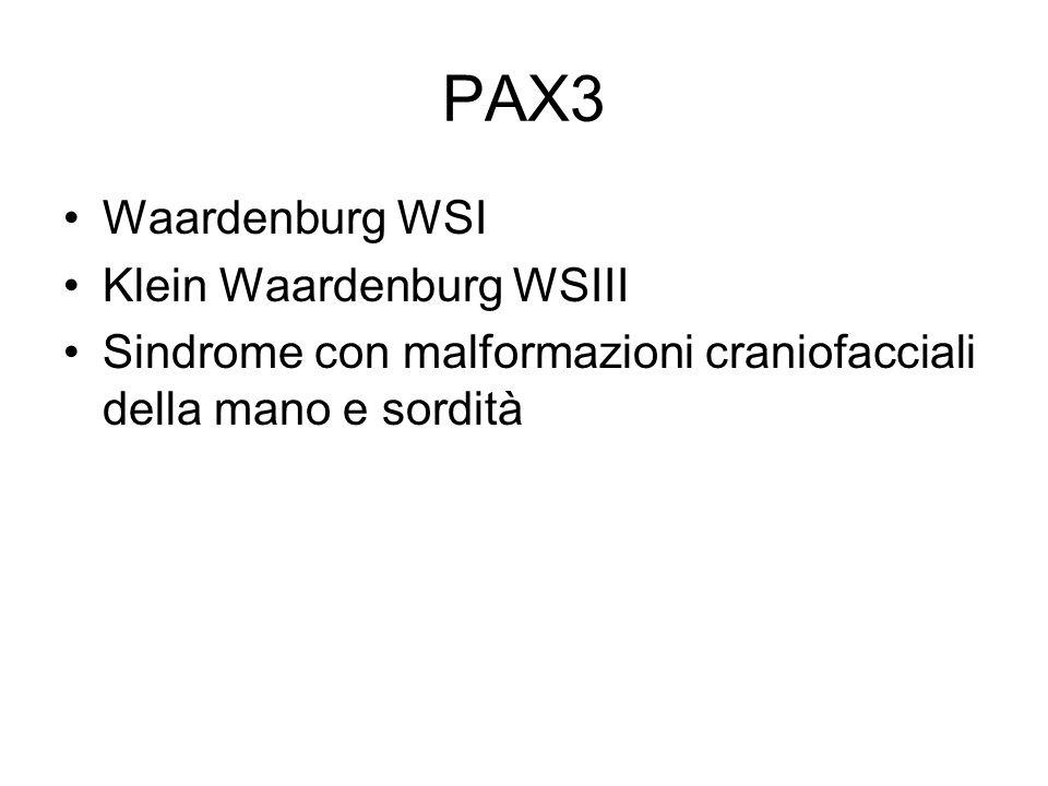 PAX3 Waardenburg WSI Klein Waardenburg WSIII