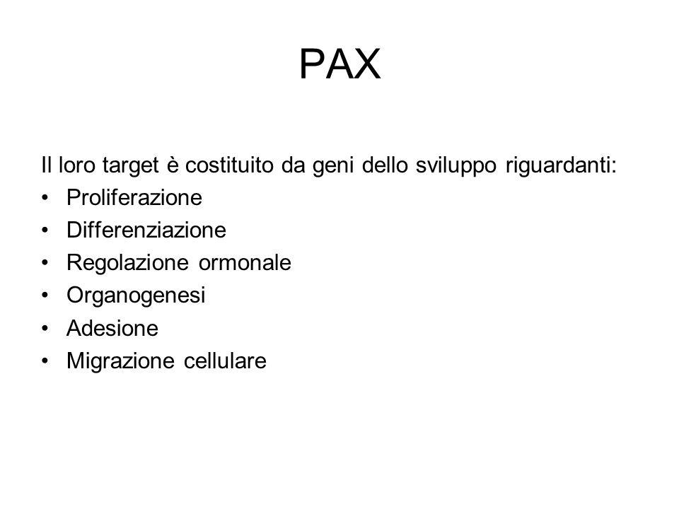 PAX Il loro target è costituito da geni dello sviluppo riguardanti: