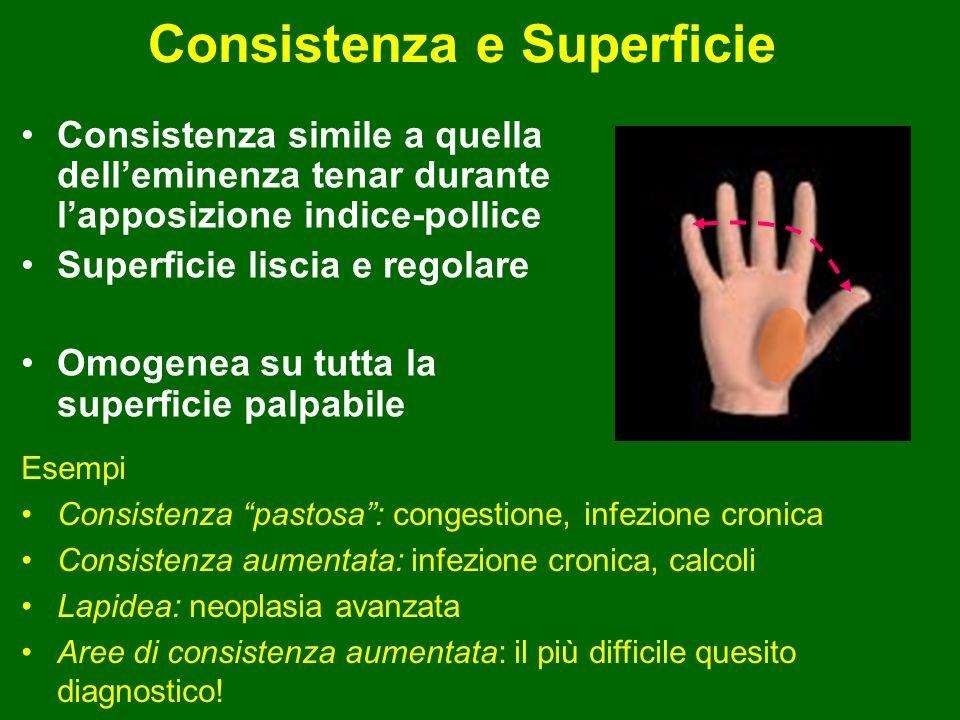 Consistenza e Superficie