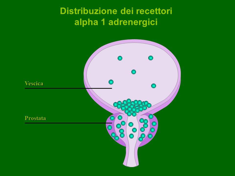 Distribuzione dei recettori alpha 1 adrenergici