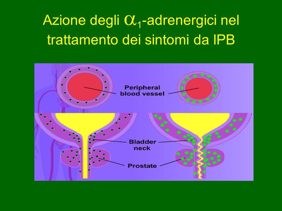 Azione degli 1-adrenergici nel trattamento dei sintomi da IPB