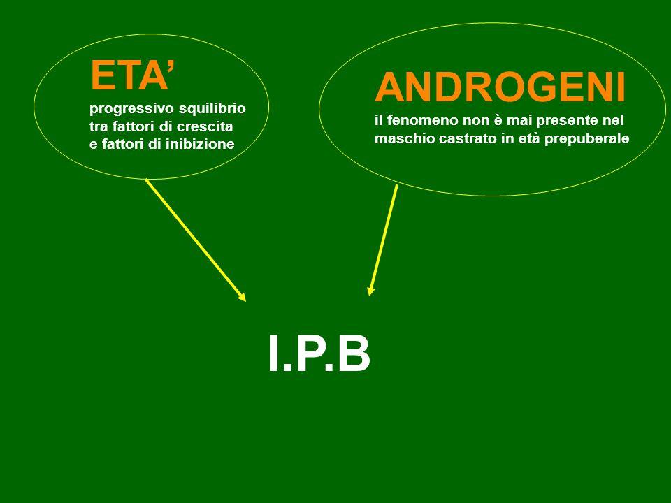 I.P.B ETA' ANDROGENI progressivo squilibrio tra fattori di crescita