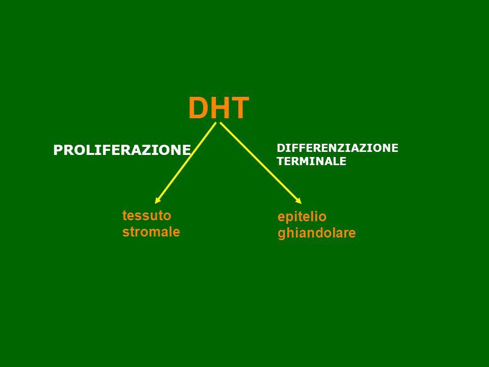 DHT e prostata DHT PROLIFERAZIONE tessuto epitelio stromale