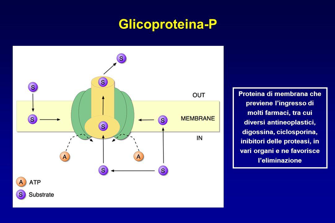 Glicoproteina-P Proteina di membrana che previene l'ingresso di