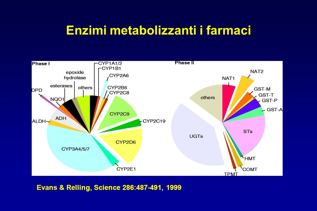 Enzimi metabolizzanti i farmaci