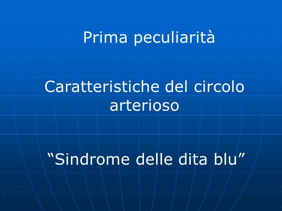 Caratteristiche del circolo arterioso