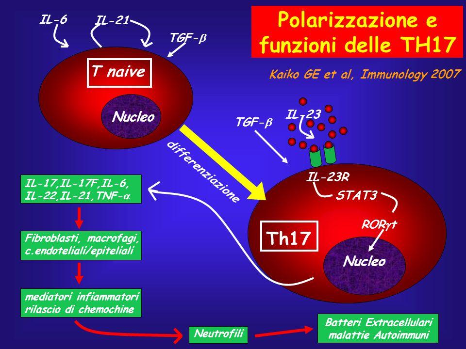 Polarizzazione e funzioni delle TH17