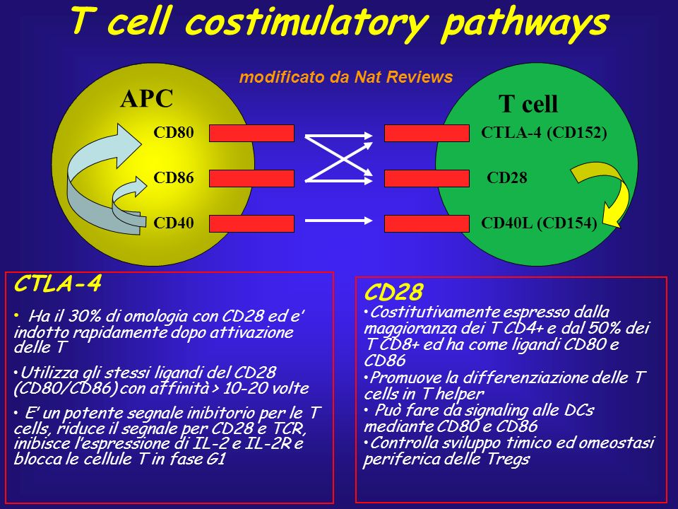 T cell costimulatory pathways