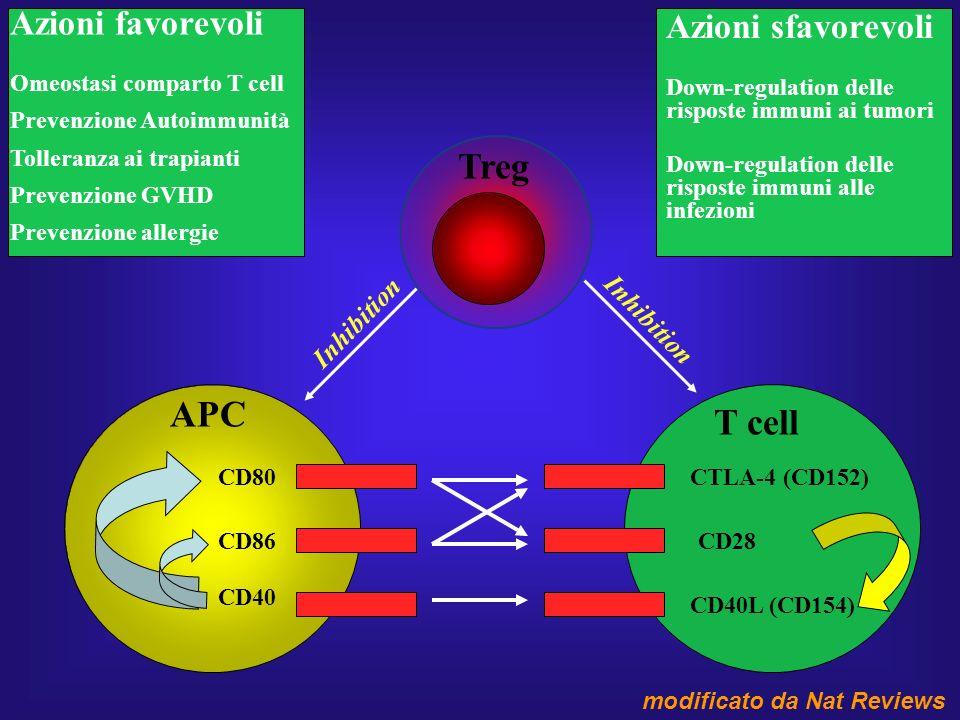 Treg APC T cell Azioni favorevoli Azioni sfavorevoli Inhibition