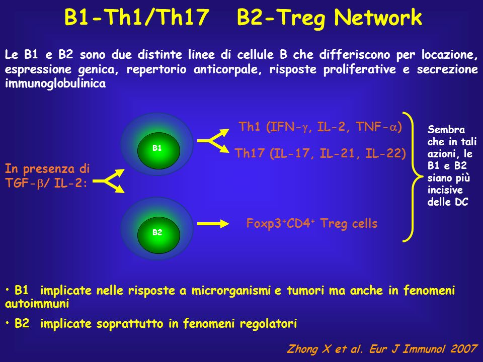 B1-Th1/Th17 B2-Treg Network