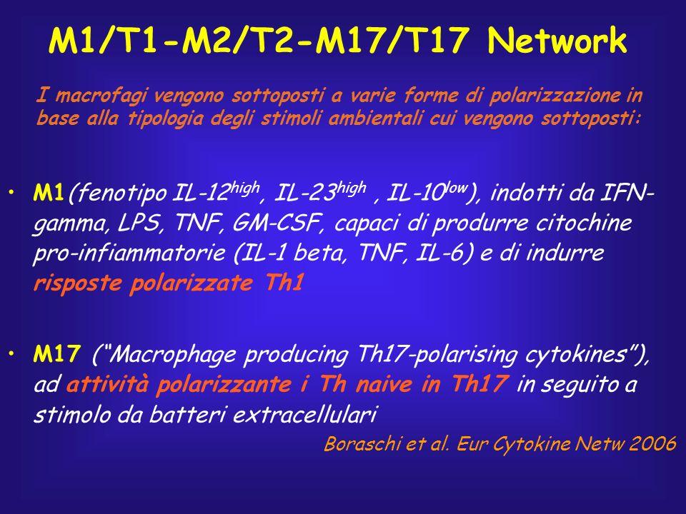 M1/T1-M2/T2-M17/T17 Network
