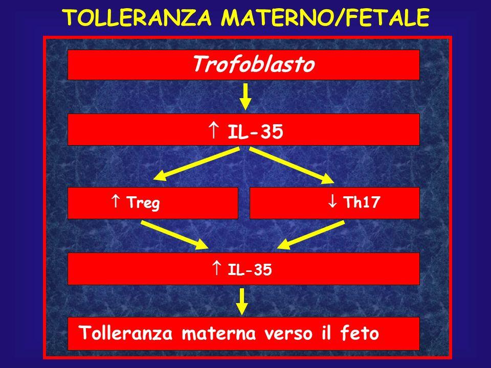 TOLLERANZA MATERNO/FETALE Tolleranza materna verso il feto