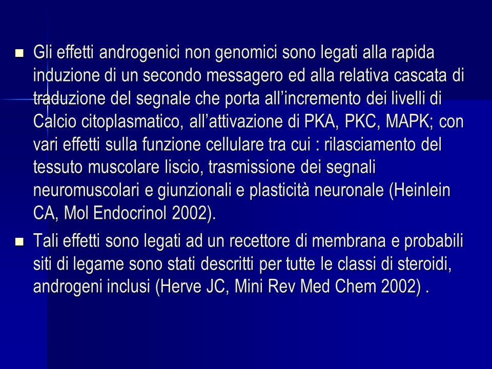 Gli effetti androgenici non genomici sono legati alla rapida induzione di un secondo messagero ed alla relativa cascata di traduzione del segnale che porta all'incremento dei livelli di Calcio citoplasmatico, all'attivazione di PKA, PKC, MAPK; con vari effetti sulla funzione cellulare tra cui : rilasciamento del tessuto muscolare liscio, trasmissione dei segnali neuromuscolari e giunzionali e plasticità neuronale (Heinlein CA, Mol Endocrinol 2002).