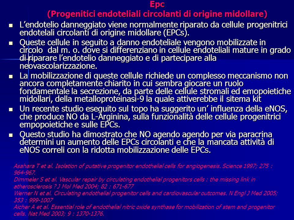 Epc (Progenitici endoteliali circolanti di origine midollare)