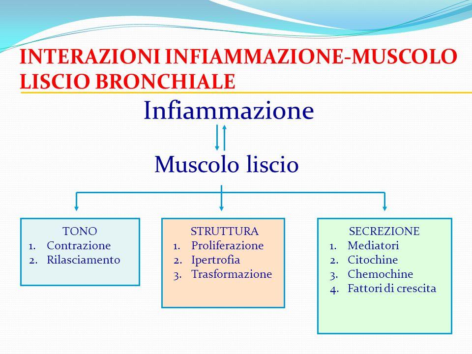 Infiammazione Muscolo liscio