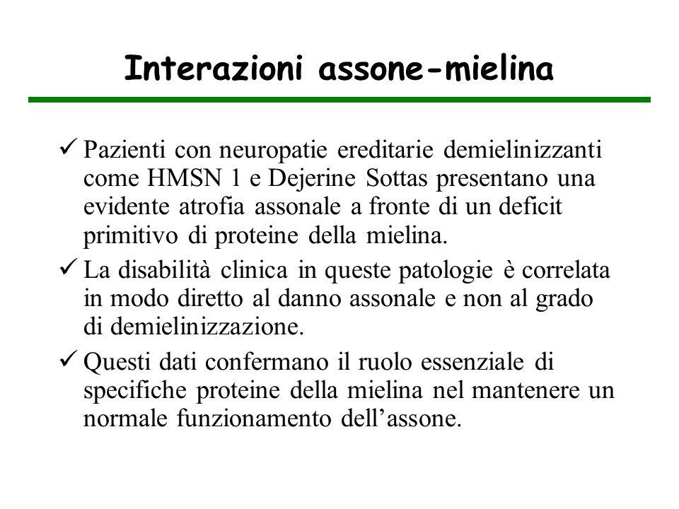 Interazioni assone-mielina