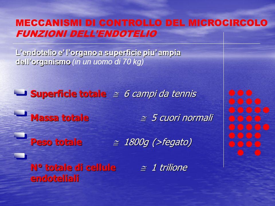 MECCANISMI DI CONTROLLO DEL MICROCIRCOLO FUNZIONI DELL'ENDOTELIO