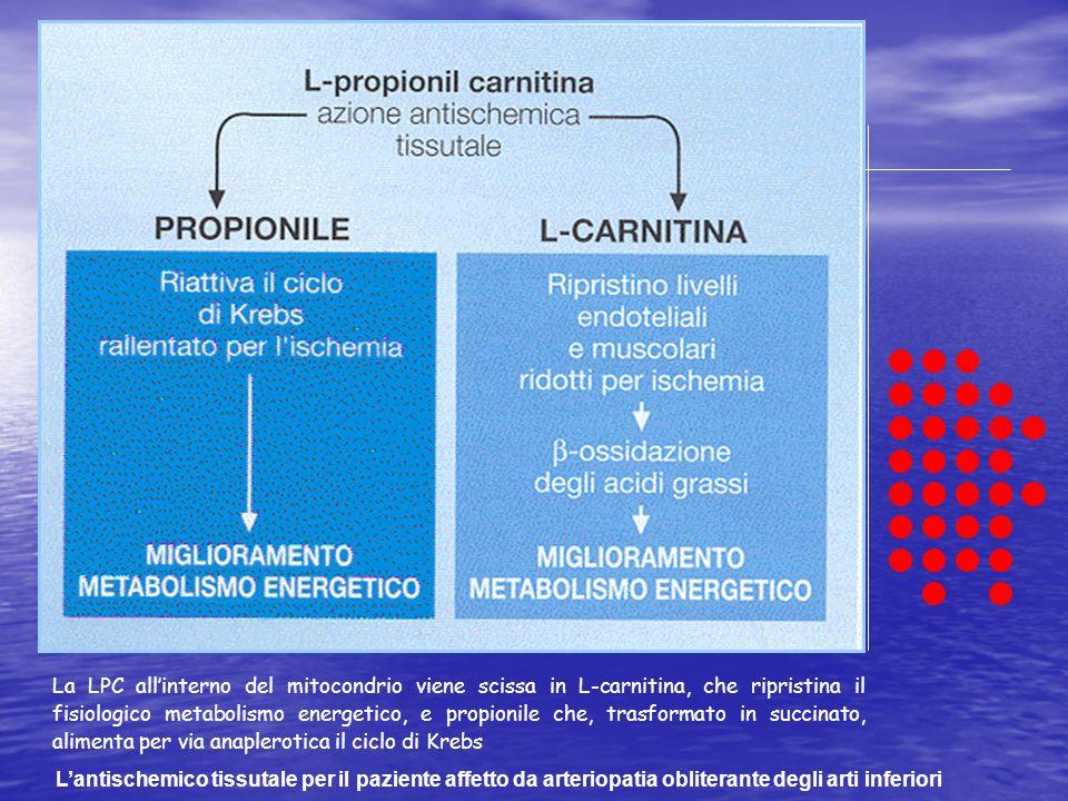 La LPC all'interno del mitocondrio viene scissa in L-carnitina, che ripristina il fisiologico metabolismo energetico, e propionile che, trasformato in succinato, alimenta per via anaplerotica il ciclo di Krebs