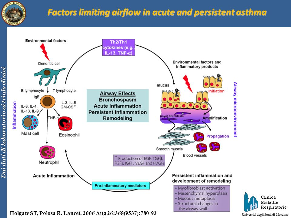 Factors limiting airflow in acute and persistent asthma
