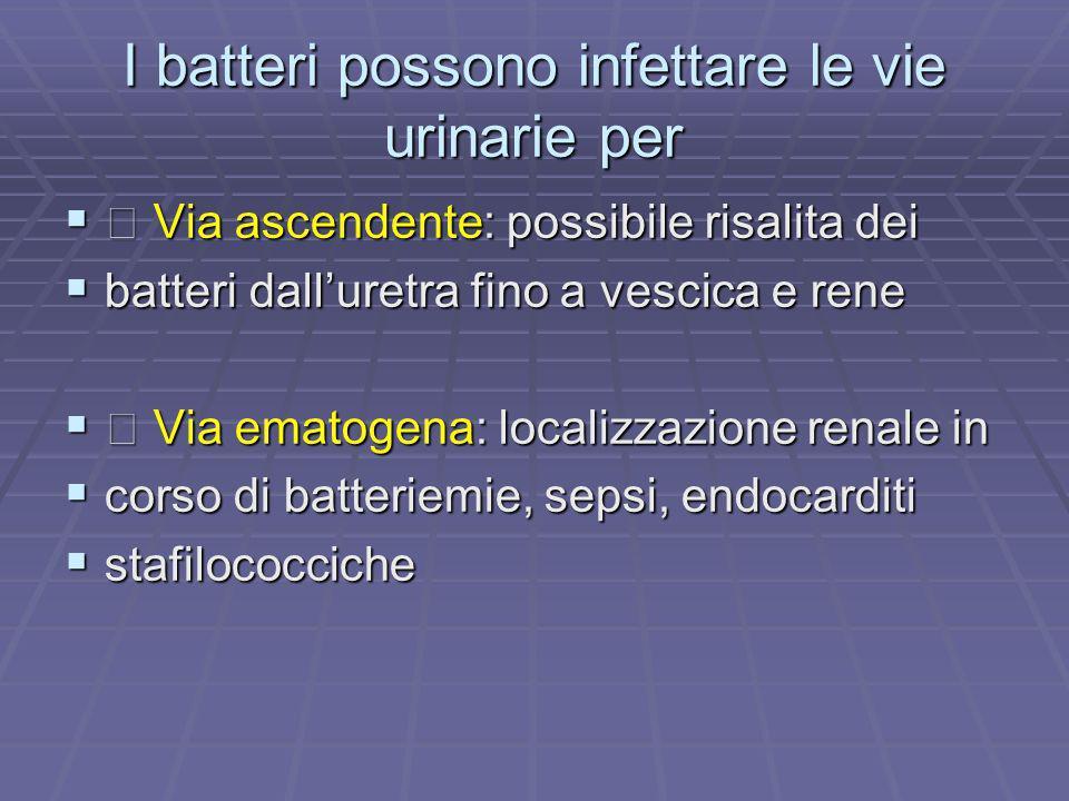 I batteri possono infettare le vie urinarie per
