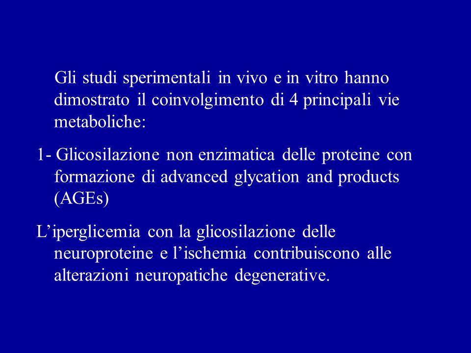 Gli studi sperimentali in vivo e in vitro hanno dimostrato il coinvolgimento di 4 principali vie metaboliche: