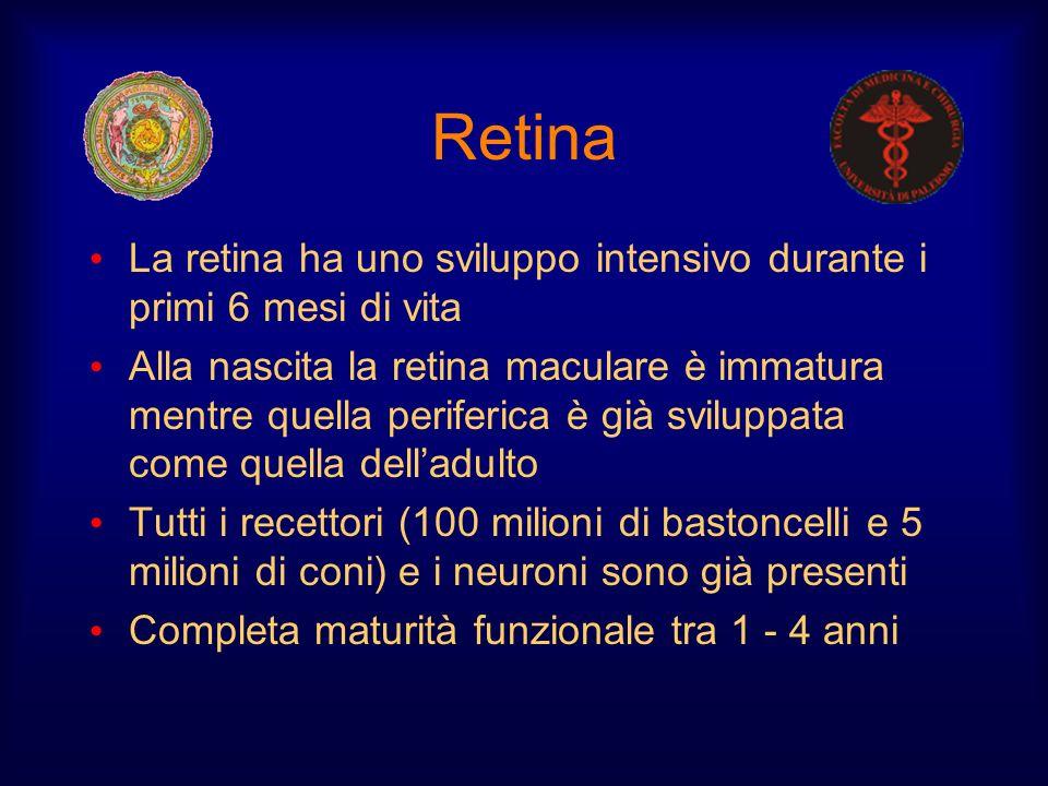 Retina La retina ha uno sviluppo intensivo durante i primi 6 mesi di vita.