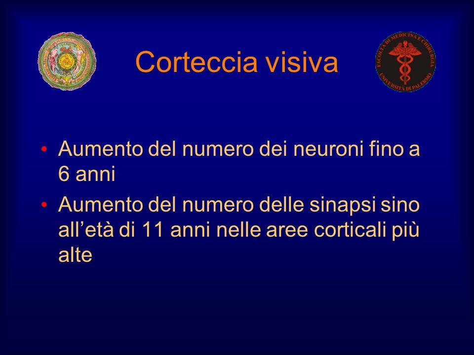 Corteccia visiva Aumento del numero dei neuroni fino a 6 anni
