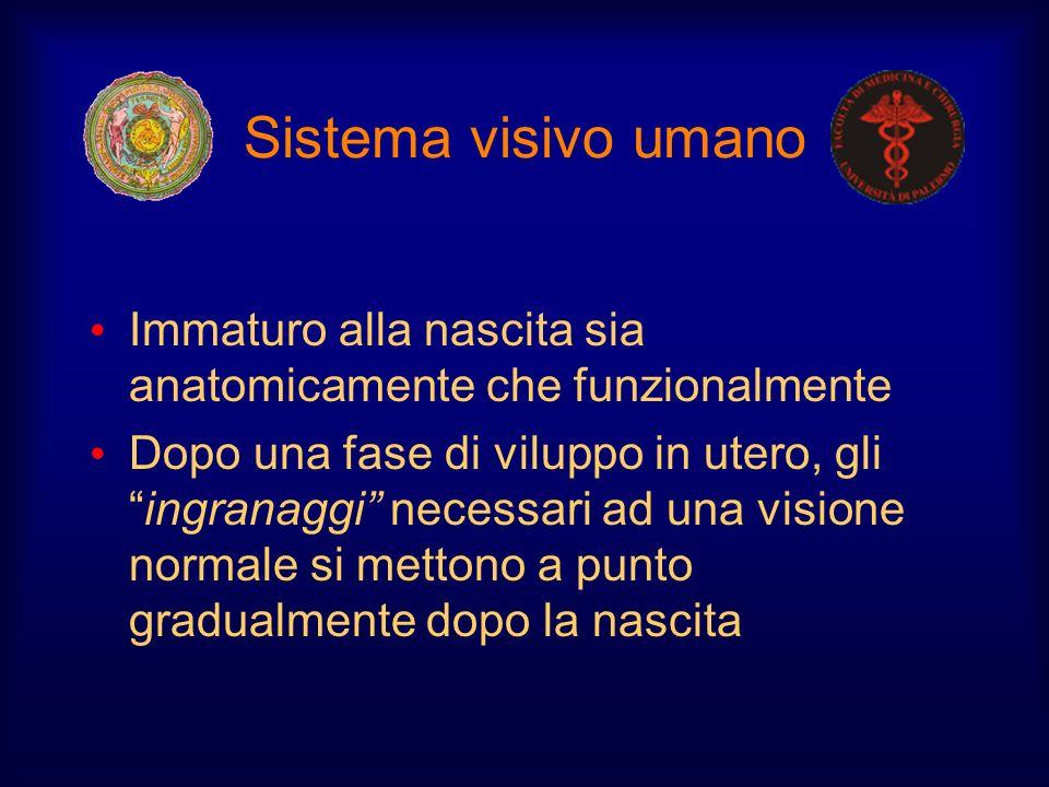 Sistema visivo umano Immaturo alla nascita sia anatomicamente che funzionalmente.