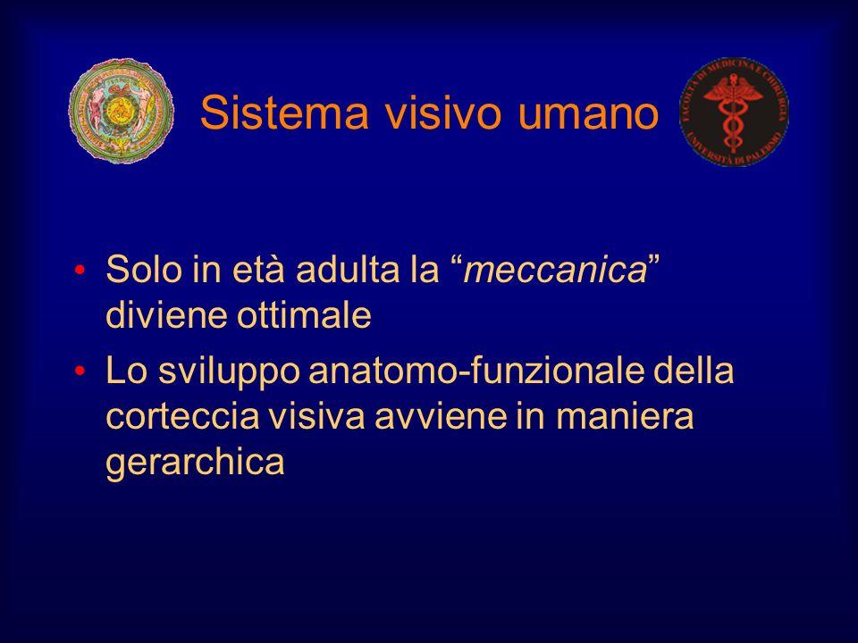 Sistema visivo umano Solo in età adulta la meccanica diviene ottimale.