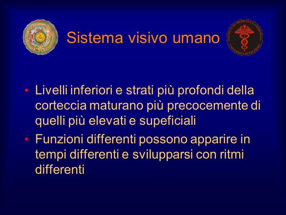 Sistema visivo umano Livelli inferiori e strati più profondi della corteccia maturano più precocemente di quelli più elevati e supeficiali.