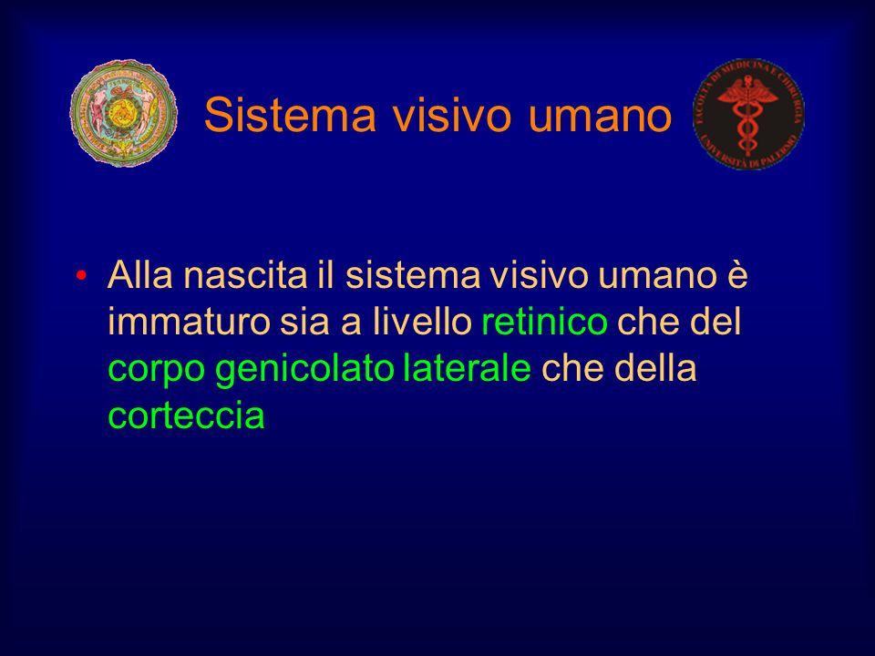 Sistema visivo umano Alla nascita il sistema visivo umano è immaturo sia a livello retinico che del corpo genicolato laterale che della corteccia.